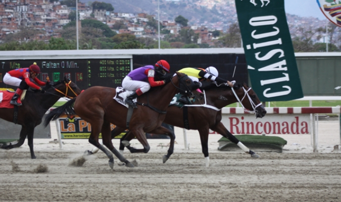 King Champ / Foto Carlos Vierma Savedra