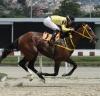 Mate correrá en La Rinconada | Foto: Cortesía