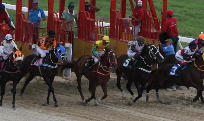 King Salvador se llevó los honores | Foto: Cortesía