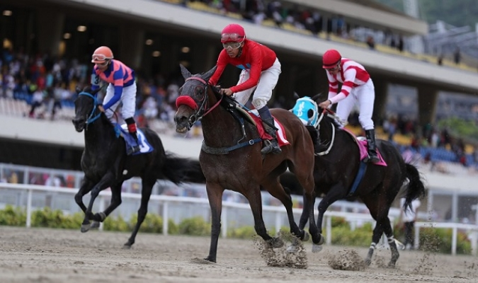 Resultados de las carreras de caballos en Coche // Foto: Cortesía