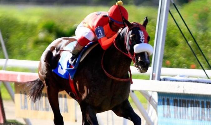 El caballo de Rey Ýánez destacó en la jornada dominical | Foto: Cortesía