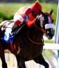 El caballo de Rey Ýánez destacó en la jornada dominical   Foto: Cortesía