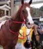 Los caballos galoparon como nunca / Foto: Cortesía