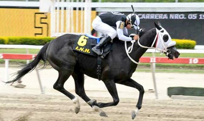 Galikos es el nombre de este caballo / Foto: Cortesía