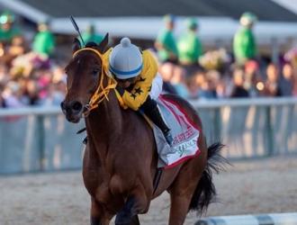 King Guillermo es el caballo de Martínez / Foto: Cortesía