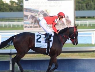 El caballo venezolano correrá en Florida / Foto Cortesía