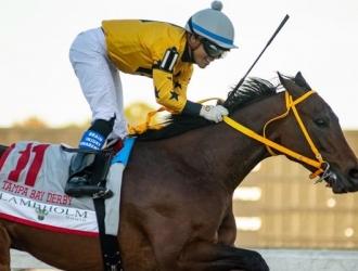King Guillermo es un caballo de Víctor Martínez / Foto: Cortesía
