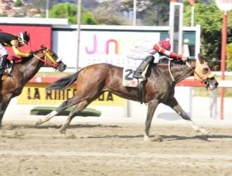 Gran Guerrero con Francisco Quevedo gana su última/JOSÉ ARAY