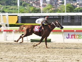 Persecuted domina a placer/ José Aray