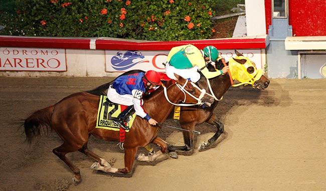 El caballo venezolano El de Chiné, ganador del Clásico Internacional del Caribe de 2012
